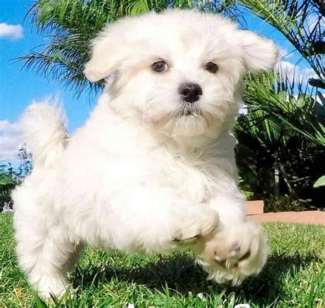 Large Breeds Non Shedding by Large Breed Non Shedding Dogs Breeds Picture