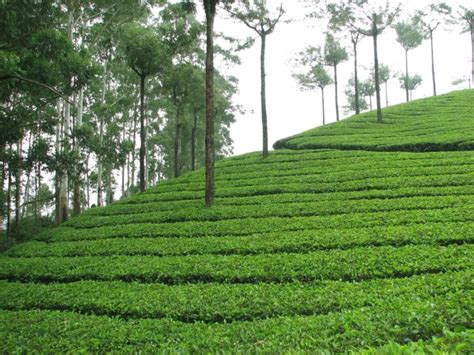 fresh off the boat watch online india munnar a little taste of heaven india s wedding blog