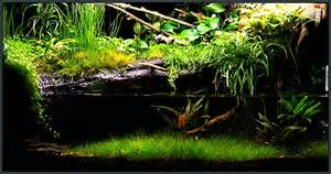 finergy aquariums paludariums