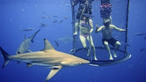cage dive with sharks shark cage diving kzn in durban cage diving kzn december
