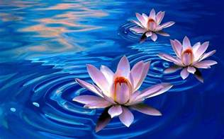 Lotus Computer Lotus Flower Wallpapers Wallpaper Cave