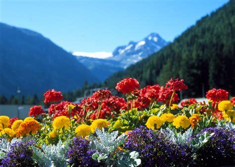 fiori primavera estate la primavera dei fiori