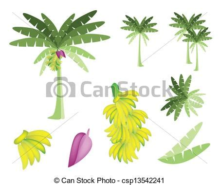 stock photo company 세트 의 바나나 나무 와 바나나 와 꽃 생태학의 개념 자형의 것 삽화 수집
