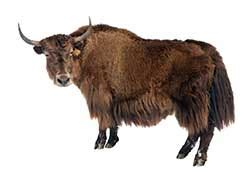 gossip synonym slang yak definition and meaning collins english dictionary