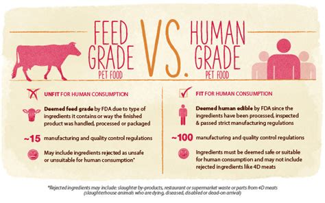 human grade food radiofence the best type of pet food for your or cat