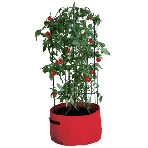 Tomato Patio Planter by Climbing Tomato Patio Planter Haxnicks