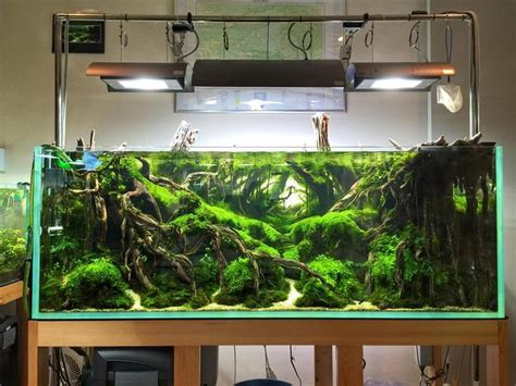 aquascape aquarium supplies 17 best images about aquascape on pinterest heart of