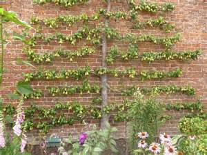 espalier vous the ordinary house