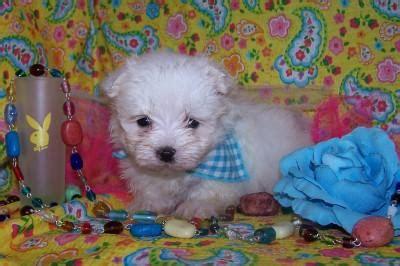 powell s puppy palace walker kennel pearson ga 31642 912 422 3982 cat boarding