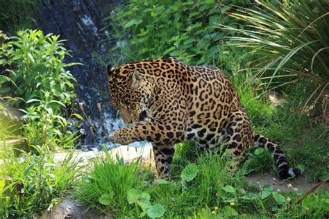 Wild Animals Free Stock Photos Download 5 952 Free Stock Photos For Commercial Use Format Hd Free Pics Of Animals