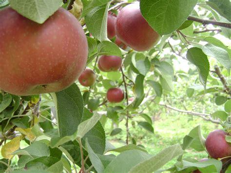 best organic fruit tree spray how to make an organic fruit tree spray garden guides