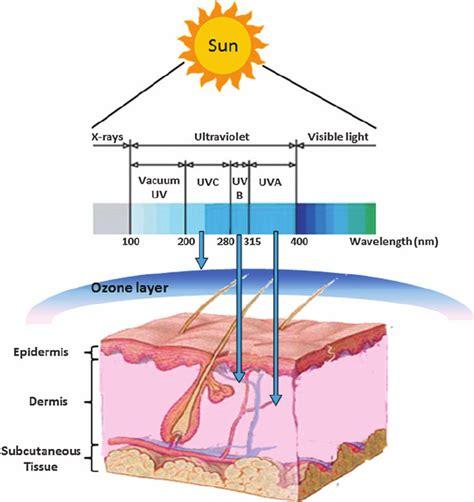Ultraviolet Light Wavelength by Uv Light Spectrum Related Keywords Suggestions Uv