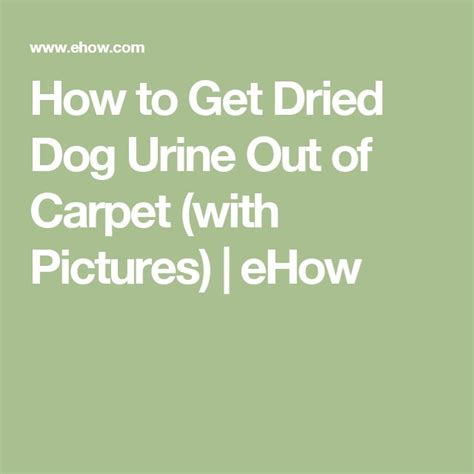 how to get pee smell out of bed how to clean dried dog urine stains from carpet