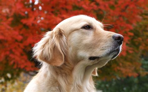 dog wallpapers all wallpapers beautiful dog hd wallpapers