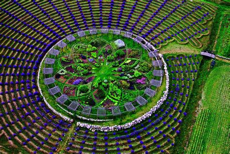 lavender labyrinth west michigan is home to a giant lavender labyrinth