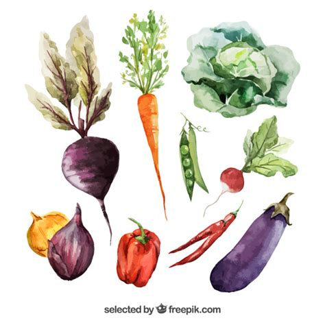 libro watercolour fruit vegetable vegetables vectors photos and psd files free download