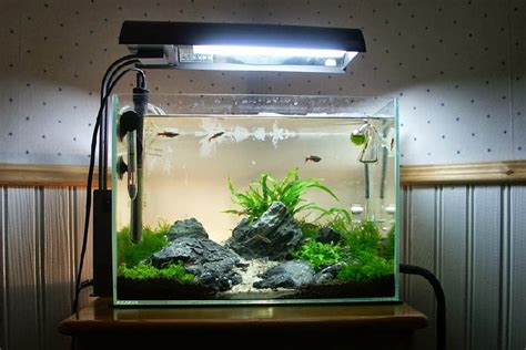 model aquarium hias  populer hingga