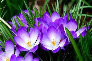 Different Types Of Purple types of purple flowers purple flowers in your garden www coolgarden