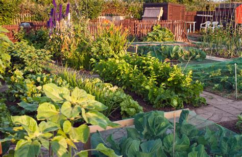Backyard Veggie Garden by 24 Fantastic Backyard Vegetable Garden Ideas