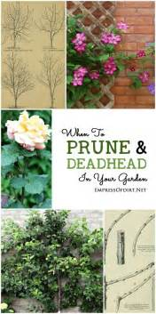 Gardening Deadheading When To Prune And Deadhead Your Garden Gardens Them And