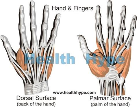hand pain causes of pain in the palm and back of hand