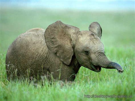 wallpaper elephant cute baby elephant cute picture desktop wallpapers free