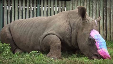 overkill the race to save africa s wildlife books veterinarians race to save of white rhino attacked by