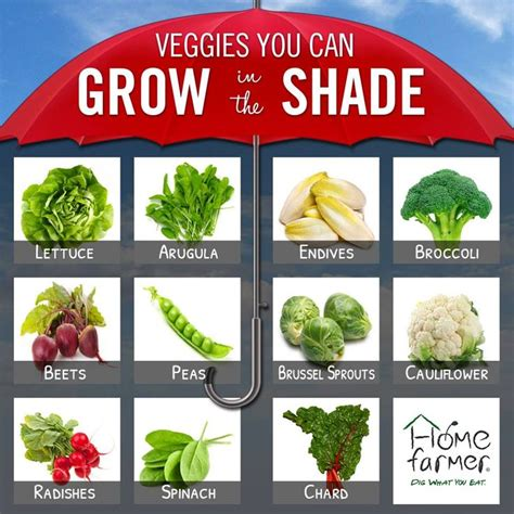 see how you can grow amazing vegetables in raised garden 2461 best gardening n diy images on pinterest gardening