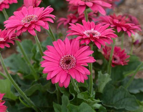 best flowers for florida gardens costa farms