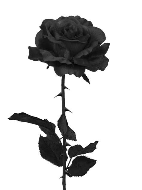 imagenes de rosas con espinas black rose png by pixasso79 stock on deviantart