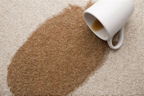 easy steps  remove coffee stains  carpet