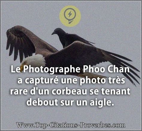 sais tu pourquoi un corbeau ressemble à un bureau citation courte le photographe phoo chan a captur 233 une