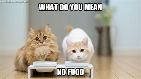 Food Cat Meme - cat memes food memes