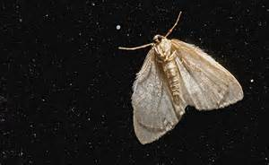 Natural History Museum Is Trying To Make Moths Turn Gay Tiny Moths All House