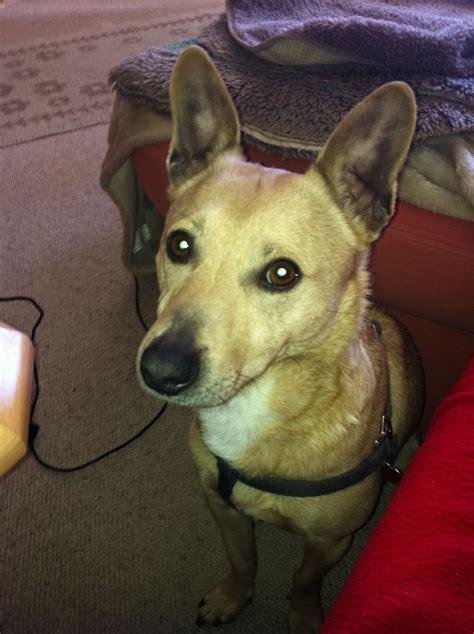 suche neues zuhause für meinen hund hunde tieranzeigen seite 206
