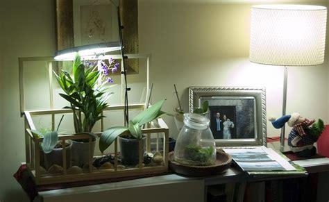 vasi per orchidee ikea dendrobium nuova orchidea e nuova serretta ikea