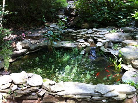 backyard ponds garden projects a gardener s delight