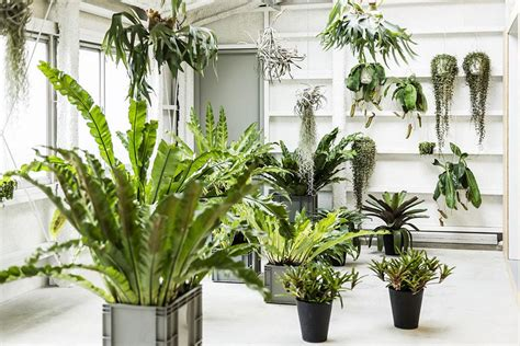 how to arrange indoor plants how to use feng shui to organize your plants indoors bulbo 174