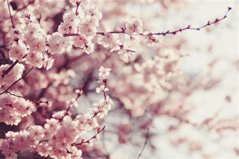 alberi fioriscono in primavera 10 piante fioriscono in primavera greenme
