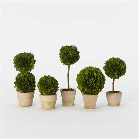 preserved boxwood mini topiary set terrain