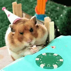 birthday leave   gif hamster eat eating