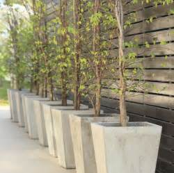 tips for growing trees in containers