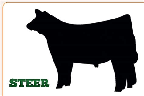 steer clipart steers clipart clipground