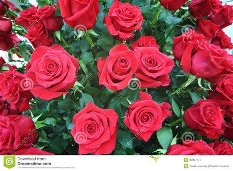 imagenes de flores rojas grandes ramo brillante grande recientemente de rosas rojas grandes