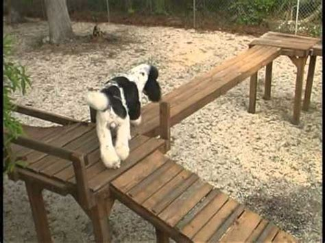 backyard obstacle course for dogs ruby on homemade dog agility course funnydog tv