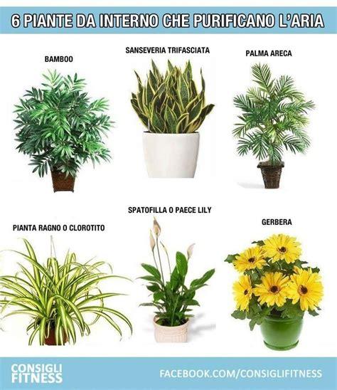 piante da interno purificano l le 25 migliori idee su piante da appartamento su