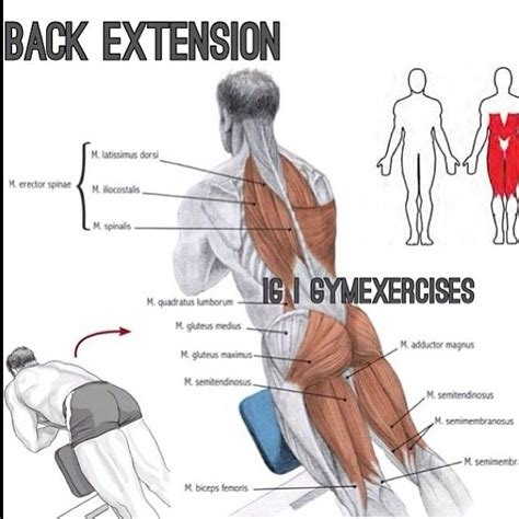 chair back extension muscles 34 best workouts images on exercise exercises