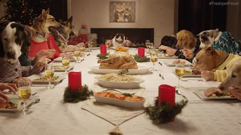 dogs dinner a of 13 dogs and 1 cat like humans yes