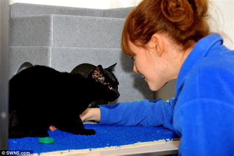 how to find a black cat in a room the psychology of intuition influence decision and trust books new homes wanted for 25 black cats found in pensioner s