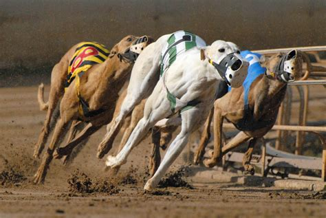 southland racing results greyhound racing
